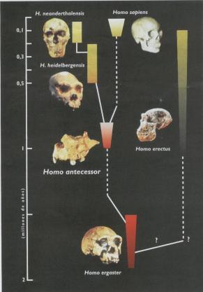 man's family tree